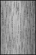 COMBRETACEAE Terminalia amazonia
