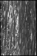 FAGACEAE Castanopsis acuminatissima