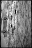 LEGUMINOSAE CAESALPINIOIDEAE Mimosoid Clade Pithecellobium racemosum