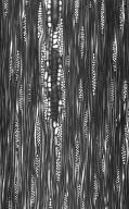 OLEACEAE Fraxinus mandshurica