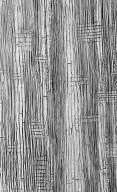 LEGUMINOSAE CAESALPINIOIDEAE Mimosoid Clade Archidendron glabrum
