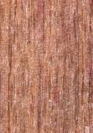 ACTINIDIACEAE Saurauia veraguasensis