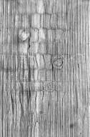 CELASTRACEAE Salacia lehmbachii