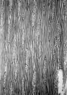 MORACEAE Ficus callosa