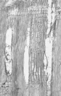 ANACARDIACEAE Schinopsis balansae