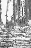 ANNONACEAE Mezzettia leptopoda