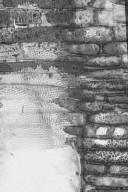 APOCYNACEAE Couma macrocarpa