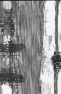 BURSERACEAE Canarium hooglandii