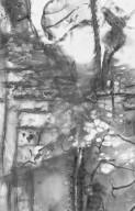 BURSERACEAE Garuga floribunda