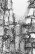 ASTERACEAE Dubautia plantaginea