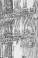 BETULACEAE Carpinus betulus