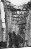 DIPTEROCARPACEAE Dryobalanops keithii