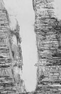 DIPTEROCARPACEAE Shorea resinosa
