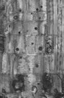 EBENACEAE Diospyros villosiuscula
