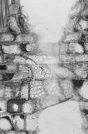 SALICACEAE Xylosma panamensis