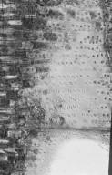 LEGUMINOSAE CAESALPINIOIDEAE Dialium platysepalum