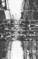 MYRTACEAE Amomyrtus luma