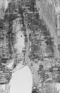 CHRYSOBALANACEAE Parinari salomonensis