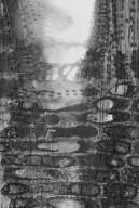 MYRTACEAE Xanthostemon petiolatus