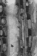 MYRTACEAE Myrcia splendens