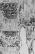 MYRTACEAE Xanthostemon brassii