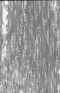 RUTACEAE Merrillia caloxylon