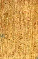 CUNONIACEAE Eucryphia lucida