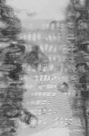 IRVINGIACEAE Irvingia malayana