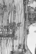 SAPOTACEAE Palaquium rostratum