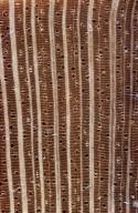 ANNONACEAE Cremastosperma cauliflorum