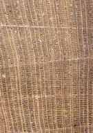 ANNONACEAE Cremastosperma microcarpum