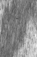 LEGUMINOSAE CAESALPINIOIDEAE Mimosoid Clade Archidendron ptenopum