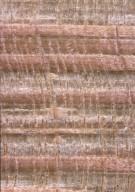SAPINDACEAE Acer platanoides schwedleri