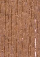 MAGNOLIACEAE Magnolia soulangeana