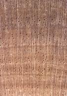 RUBIACEAE Genipa clusiifolia