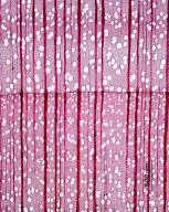 ROSACEAE Prunus jamasakura