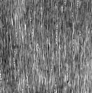 GENTIANACEAE Ixanthus viscosus