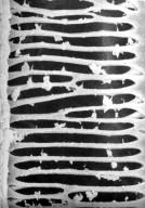 SCHISANDRACEAE Illicium cubense