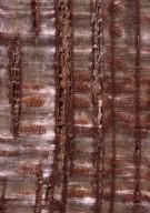 LEGUMINOSAE DETARIOIDEAE Eperua rubiginosa