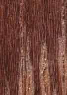 LEGUMINOSAE DIALIOIDEAE Koompassia malaccensis
