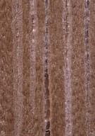 LEGUMINOSAE DETARIOIDEAE Microberlinia brazzavillensis