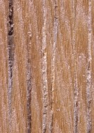 LECYTHIDACEAE Eschweilera pedicellata