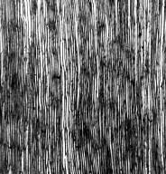 STYLIDIACEAE Stylidium laricifolium