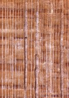 CHRYSOBALANACEAE Hirtella glandulosa