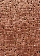 CHRYSOBALANACEAE Licania canescens