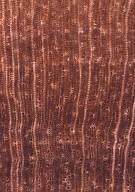 RUBIACEAE Rudgea cornigera