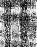 CELASTRACEAE Pterocelastrus tricuspidatus