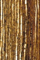 FAMILY? NutBeds Malpighialean Wood Type I
