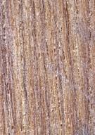 DICHAPETALACEAE Tapura amazonica
