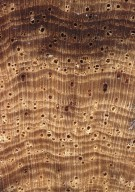 LEGUMINOSAE MIMOSOIDEAE Archidendron aruense